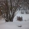 Havazás Kaposszekcsőn 035.JPG