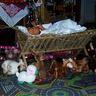 04 - Az ovi jászolában feküdt a kis Jézus.jpg