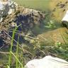 09 - Érdekes látvány volt a sok-sok ebihal.jpg