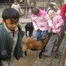 05 - Mindenki barátra lelt az állatkerti simogatóban.jpg
