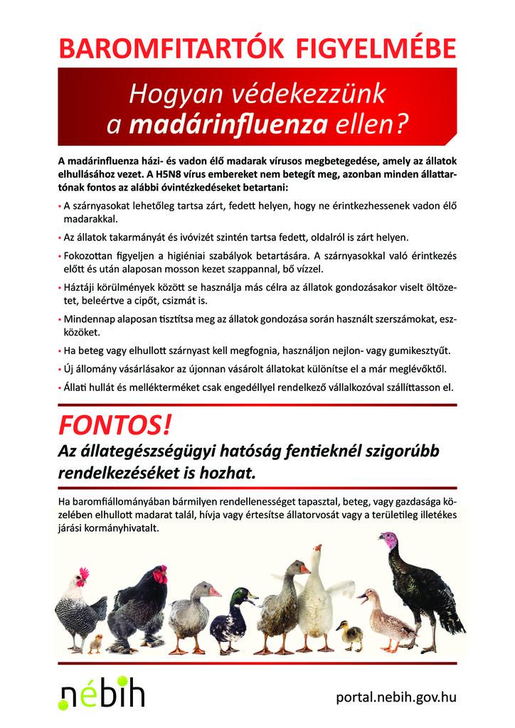 Madárinfluenza plakát