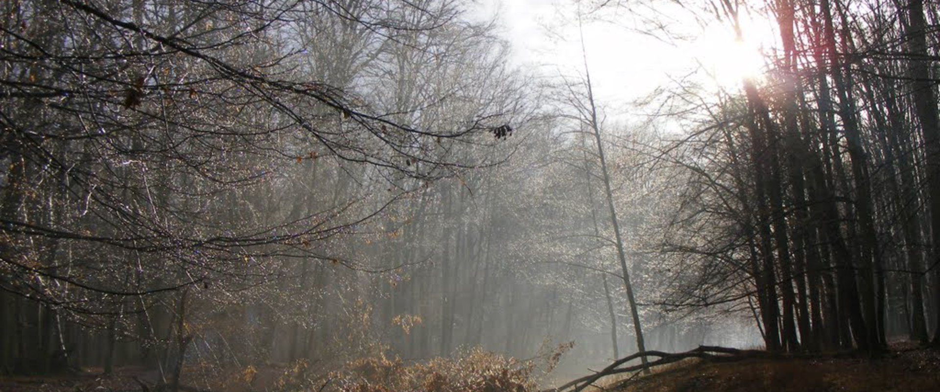 Öszpötei erdő